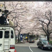 午後から都バスで港区花見迷走ツアー