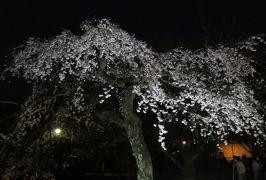 2016春、京都の桜巡り(13/13):3月30日(13):宇治平等院(2):ライトアップされた宇治平等院、絵ハガキなどでの紹介