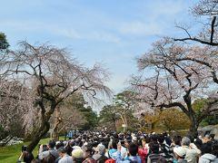 皇居乾通り一般公開 桜は
