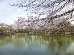 太田ヶ谷沼の春・・🌸