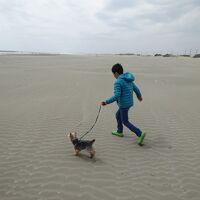 愛犬チップ号、初めて海へ行く!