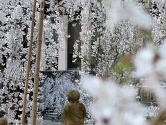 「京都早咲き桜コース」