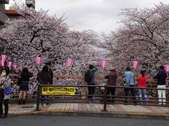東京・桜の人気スポット満開の目黒川~目黒天空庭園~山種美術館を訪れて