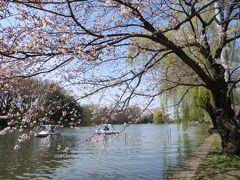 桜咲く石神井公園