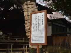 標準木の桜の開花を愛でる、靖国神社の巻