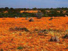 ヴィクトリアの滝から南アフリカへ奇跡の花園ナマクワランド13日間