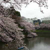 千鳥ヶ淵→靖国神社→市ヶ谷→東京  桜散歩♪夕方龍ヶ崎般若院の古木しだれ桜に酔いしれる