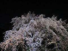 2016/03 六義園