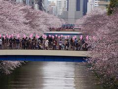 目黒の桜を初めて見た。
