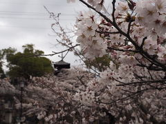 2016京都花見旅 今年は「梅津」さんで!