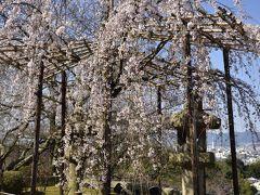 2016年の京都桜の花見は、1週間位早すぎたが、(;へ;)、グルメ重視の旅は成功!MICHELINのレストランガイドで☆☆☆の料亭「 京懐石 吉泉」のお料理は素晴らしかった  v(*'-^*)-☆