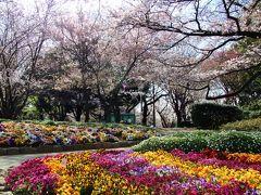 王子界隈で桜巡り2016年3月31日