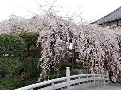 花より団子♪ ~ほんの少しの桜とお食事会~