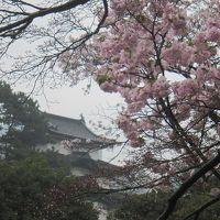 SAKURA 桜 さくら〜最終日の皇居乾通り・北の丸公園・靖国神社・千鳥ヶ淵〜