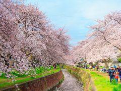 春の桜散歩③~大和千本桜~