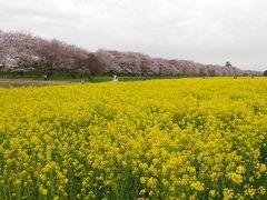 幸手・権現堂桜堤をメインに、春を感じる花巡りドライブ
