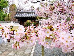 京都の桜☆今年は上品蓮台寺・千本釈迦堂・平野神社へ