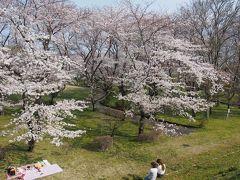 木曽川堤桜ドライブ