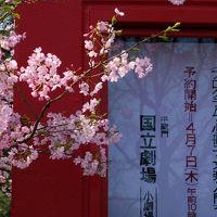 桜を追いかけて−2 国立劇場