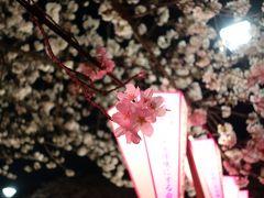 友人と目黒川ランチと夜桜見物