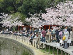 2016春、奈良の桜巡り(4/13):4月3日(4):橿原神宮(4):橿原神宮、2600年大祭、深田池の畔の桜、表参道、橿原市街