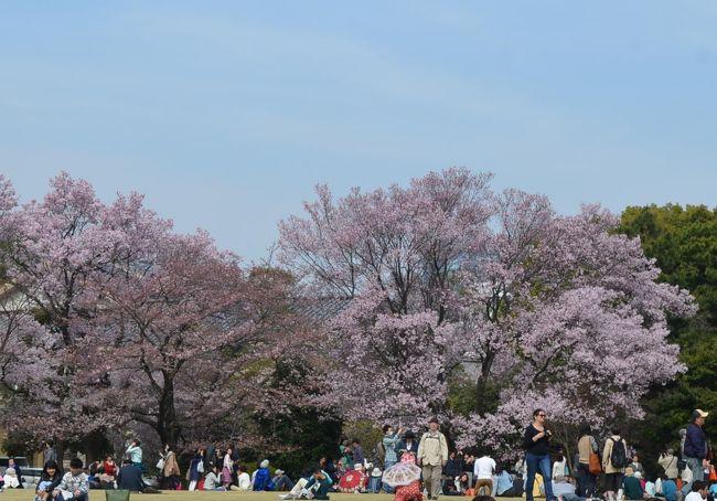 皇居、乾通りで桜を見た後に、隣の東御苑を訪れた。<br /><br />東京、横浜に住んでいながら、東御苑には初めて訪れた。<br />面積は約21万?の広い敷地に、乾通りより多い280本の桜が期待できる。<br /><br />さらに、お城が好きな私には、江戸城跡の名残りを見るのも楽しみにしていた。<br /><br />