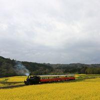 2016年 千葉県市原市 養老渓谷~飯給 菜の花&桜巡り