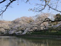 鎌倉で桜めぐり ~光明寺・妙本寺から八幡宮 人の少ない穴場コース~
