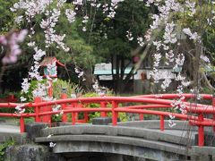 三嶋大社と小田原城の桜