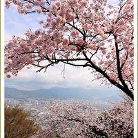 Solitary Journey [1740] 春色のさくらの花が溢れていました。\(●^0^●)/…さくらが満開でした!<黄金山&比治山公園>広島市南区