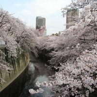 雑司ヶ谷・目白台・早稲田界隈でお花見 2016年4月