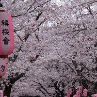 お花見コース、野島展望台〜称名寺へ