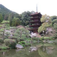 緊急レポート! 桜の咲く瑠璃光寺に今日、行ってきました!