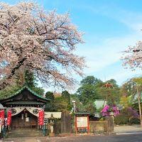 春ららら、小江戸・川越~喜多院の桜