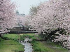2016年4月3日:桜満開の野川西之橋~武蔵野公園まで散策