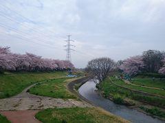 お散歩道・小畔川・春  in埼玉県・川越