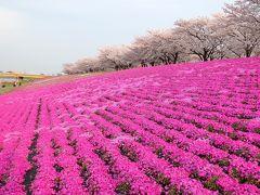 東京・北区のお花見散歩~飛鳥山公園・音無親水公園と荒川赤羽桜堤緑地