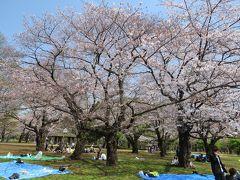 東京代々木・新宿のさくら・・代々木公園をめぐります。