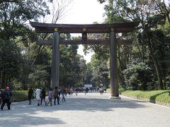 東京代々木・新宿のさくら・・明治神宮をめぐります。