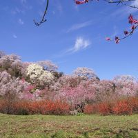 ◆福島の桃源郷・花見山 2016 Part1