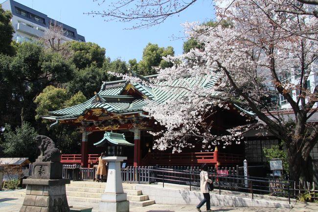 一枝に一重と八重が混ざって咲く珍しい金王桜が見頃となった渋谷の金王八幡宮に花見に行きました。<br />その後代々木公園まで渋谷、原宿を散策。<br />代々木公園ではソメイヨシノはまだ3分咲から5分咲程度でした。<br />表紙は金王八幡宮拝殿と金王桜<br />