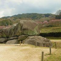 桜には早かった奈良 2 やっと石舞台に。。。