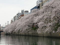 またまた屋形船に乗っちゃいました! 大岡川沿いの桜のお花見です!!