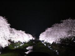 2016年4月5日:一夜限りの幻想的な夜桜 野川上流域 桜探訪(小金井市西之橋~調布市細田橋)