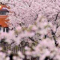 赤色の国鉄型車両103系を追いかけて、満開な桜が咲き広がる桜ノ宮と大阪城に訪れてみた