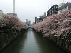 1泊2日で行く目黒川の桜・皇居乾通りの桜・御柱祭を楽しむ旅パート1