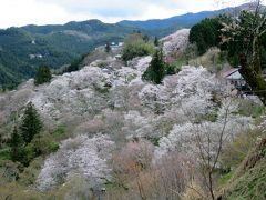 2016春、奈良の桜巡り(5/13):4月3日(5):吉野山(1):橿原から吉野へ、お花見弁当、散り始めの下千本、満開の中千本