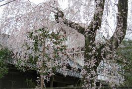 2016春、奈良の桜巡り(9/13):4月3日(9):吉野山(5):南朝の御所だった吉水神社、の入口、三又の花、勝手神社、静御前の舞の歌碑
