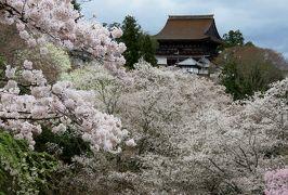 2016春、奈良の桜巡り(10/13):4月3日(10):吉野山(6):中千本、上千本、吉水神社からの蔵王堂、宮坂付近の桜光景