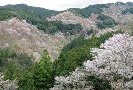 2016春、奈良の桜巡り(11/13):4月3日(11):吉野山(7):吉水神社、修復中の本殿、南朝の御所址、一目千本、一目十年